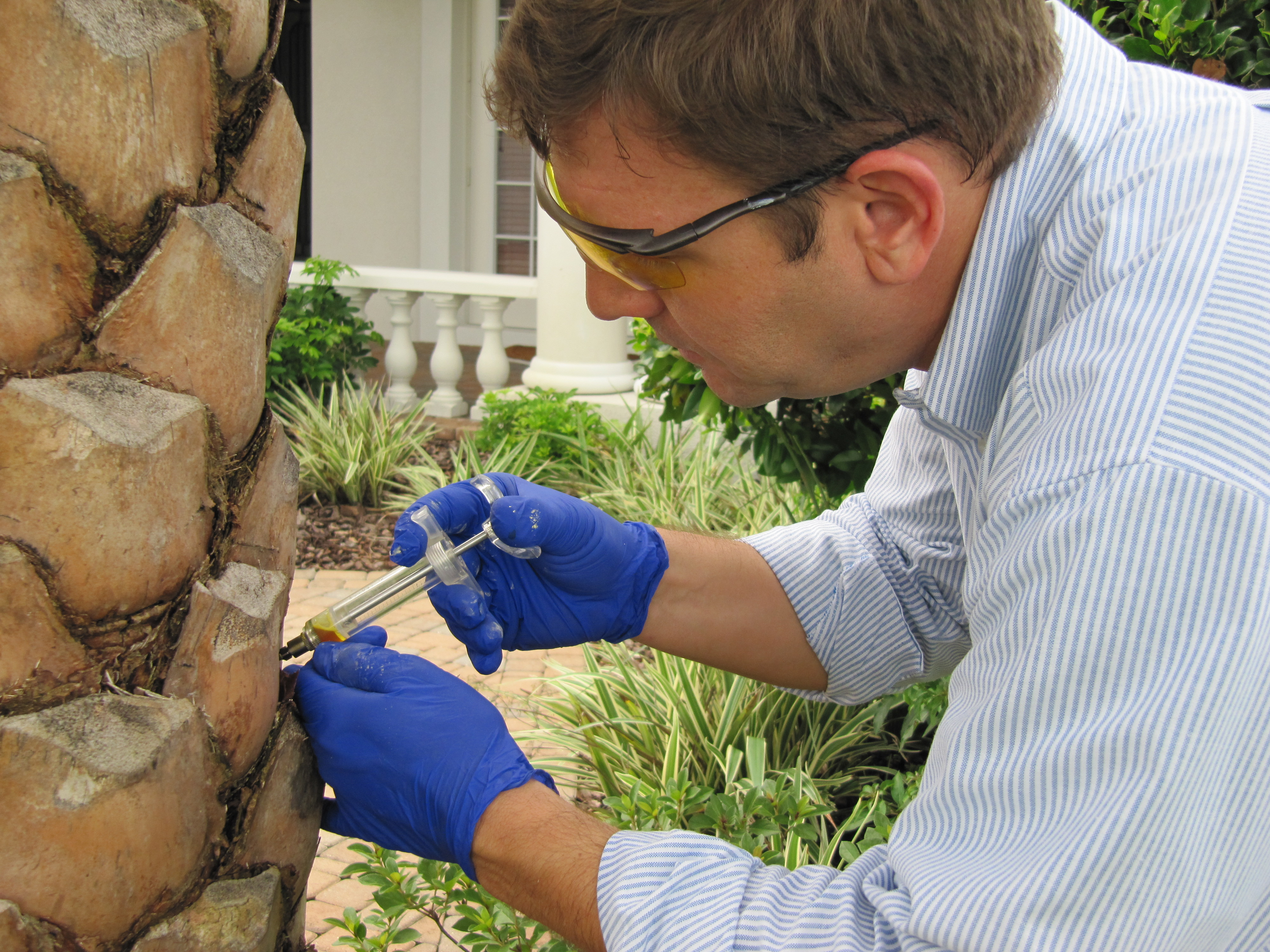 Palm Tree Care Tampa Clearwater St Petersburggreen