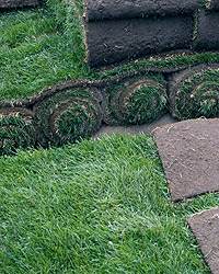 replace-sod