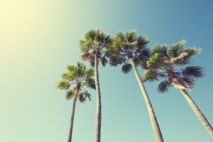 palm-trees